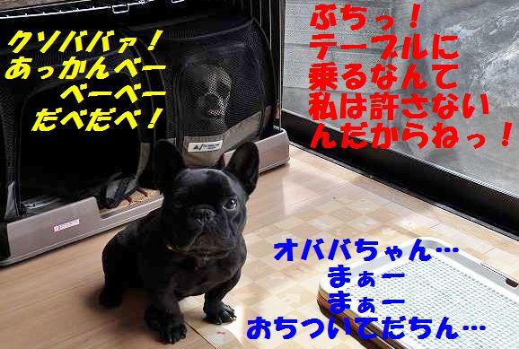 040_20150420162356fb7.jpg