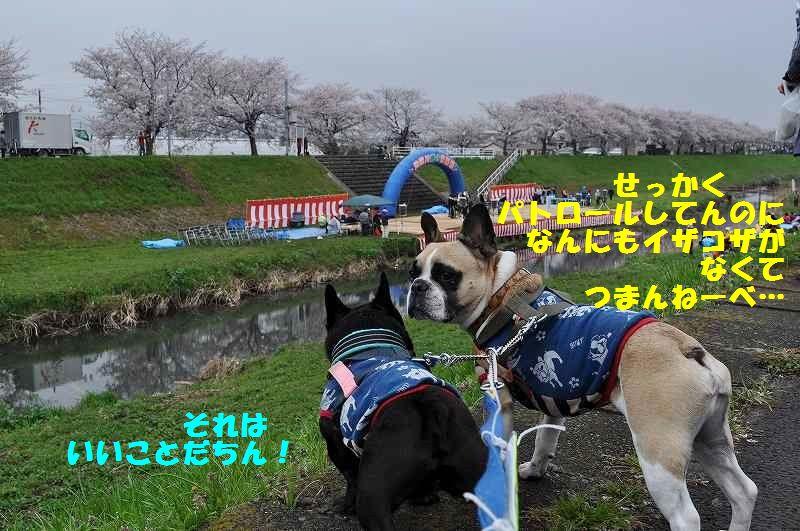 041_20150406152832dbd.jpg