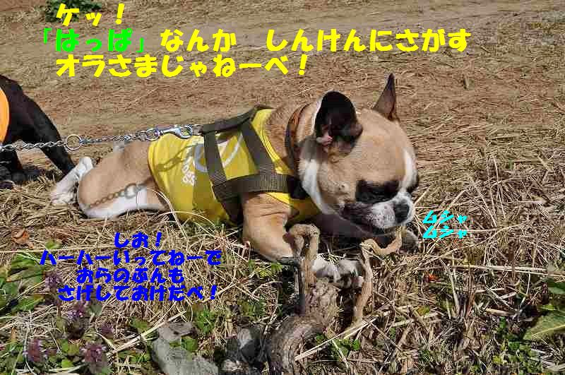 057_20150330150205783.jpg