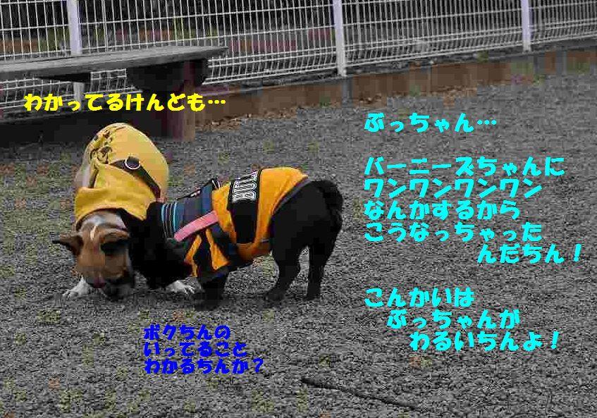 064_20150316152925e2b.jpg