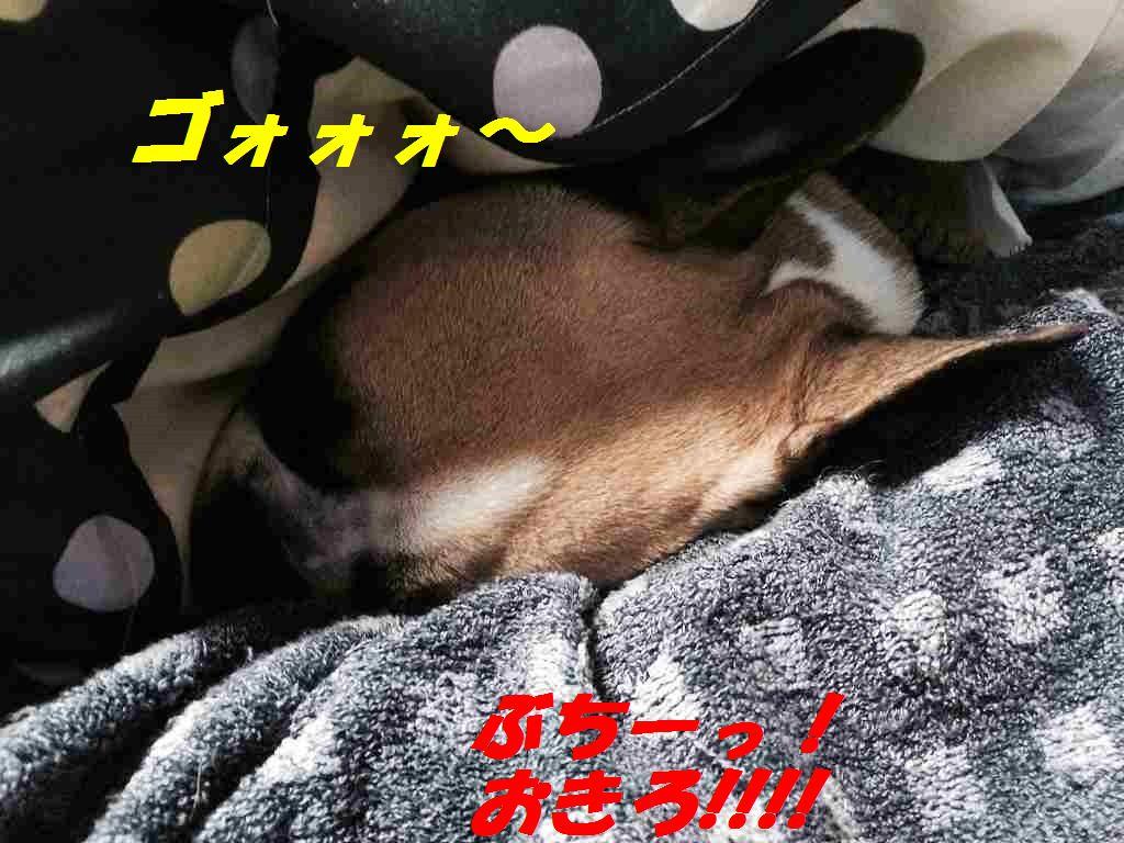 IMG_4233 (1)