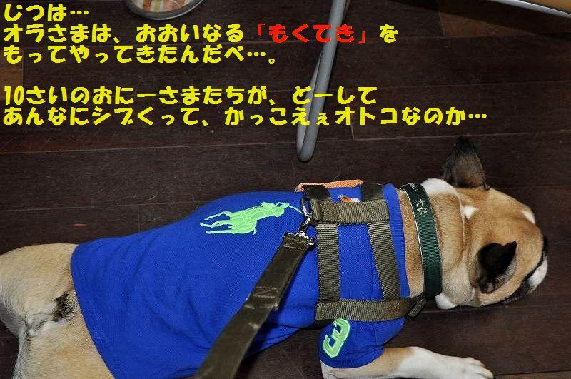 DSC_0015_20150527165328f8e.jpg