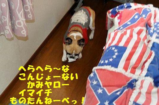 DSC_0042_20150126095302d2f.jpg