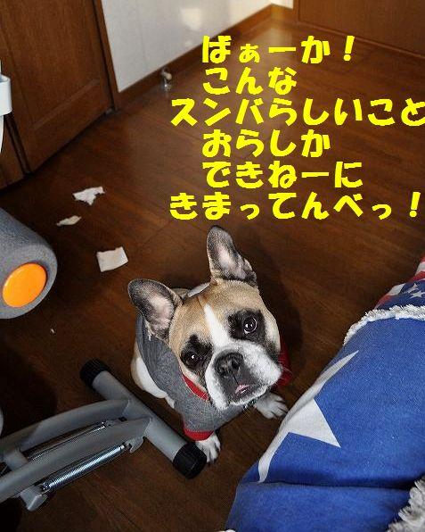 DSC_0046_201501260953059e3.jpg
