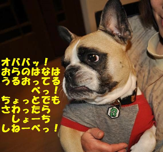 DSC_0075_20150129153551423.jpg