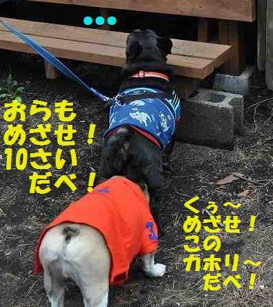 DSC_0189_2015052717203146e.jpg
