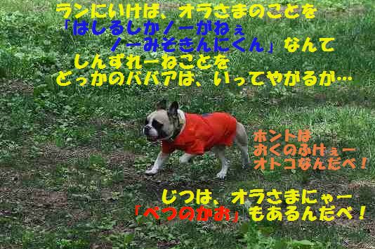 DSC_0228_2015053010403705c.jpg
