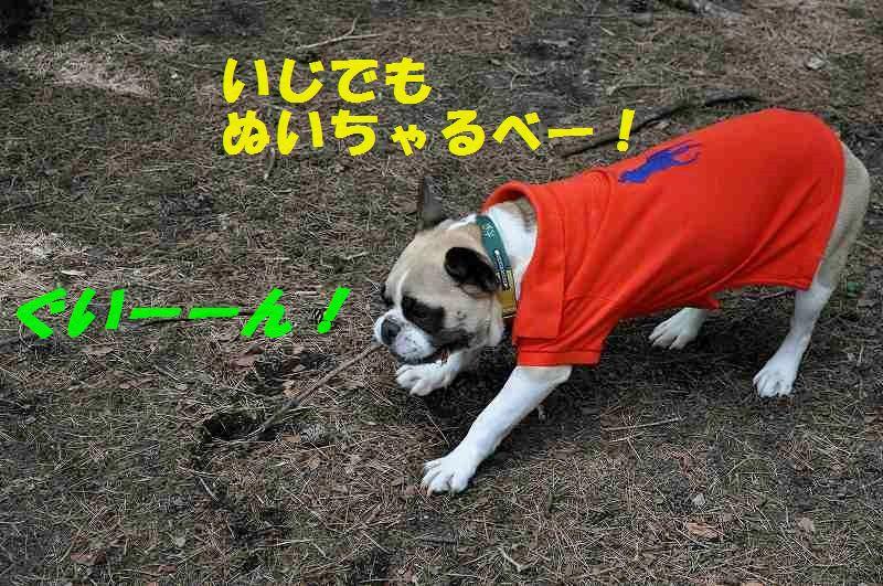 DSC_0234_20150530104140ae2.jpg