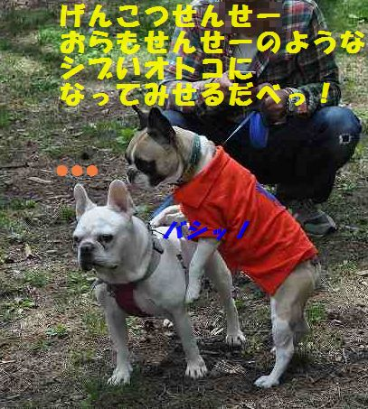 DSC_0261_20150529111153054.jpg