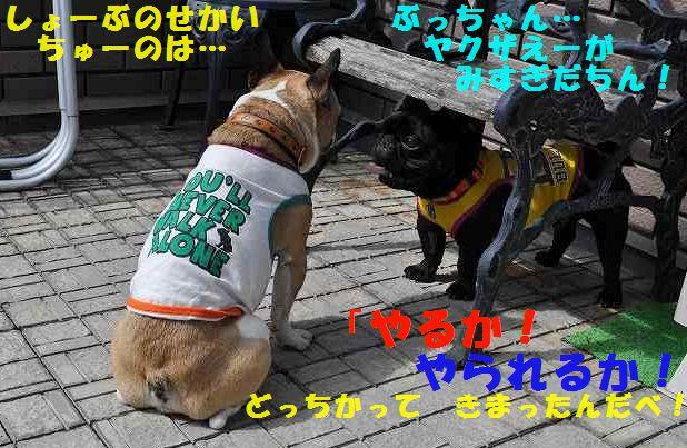DSC_1008.jpg