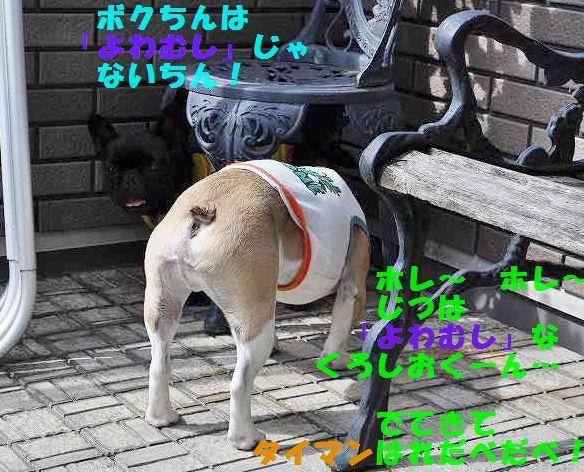 DSC_1017.jpg