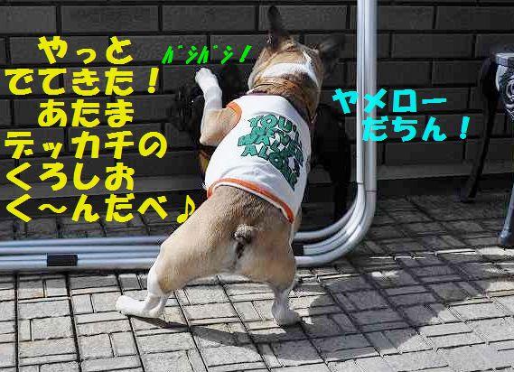 DSC_1021.jpg