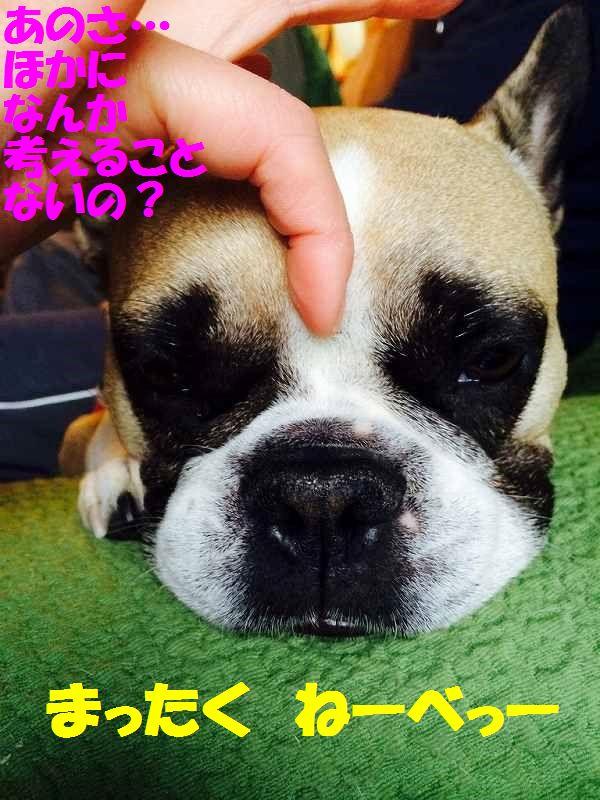 IMG_0541.jpg