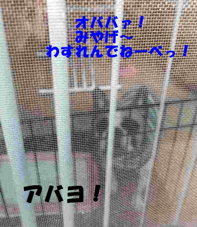IMG_1616.jpg