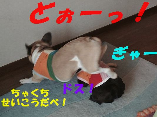 IMG_4442.jpg