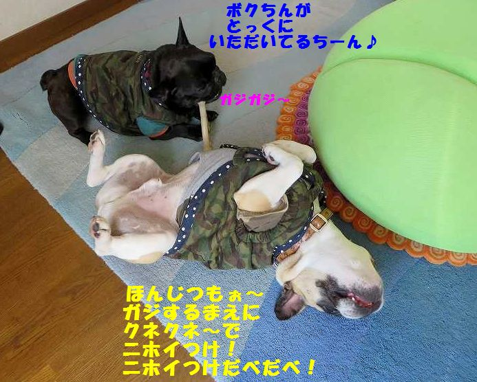 IMG_4687.jpg