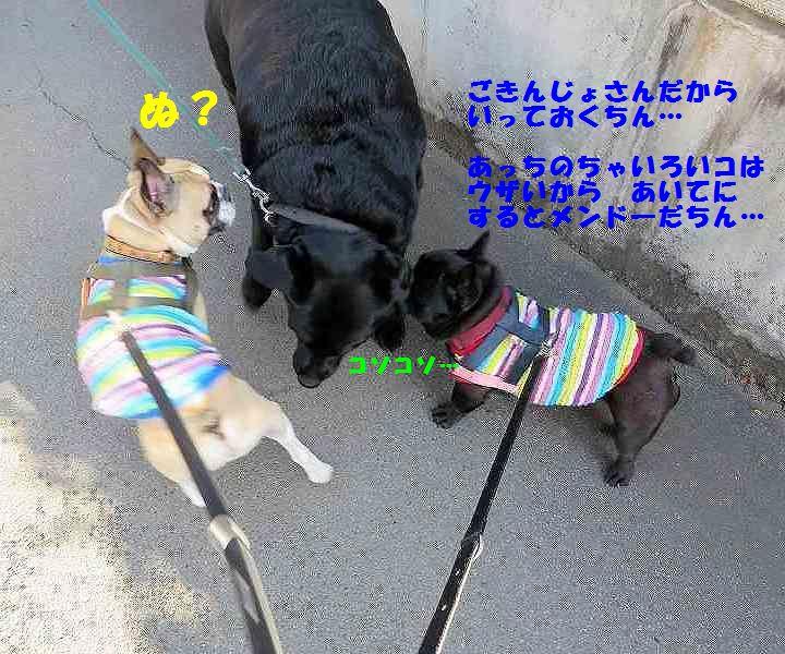 IMG_4764.jpg