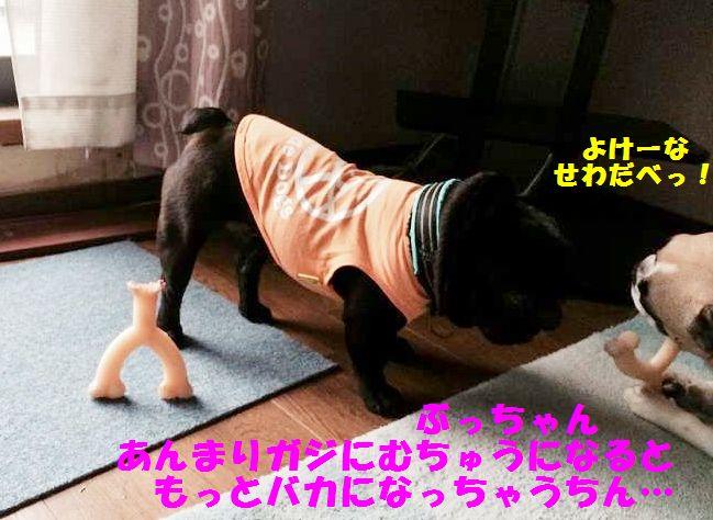 IMG_6327_201504021604100b5.jpg