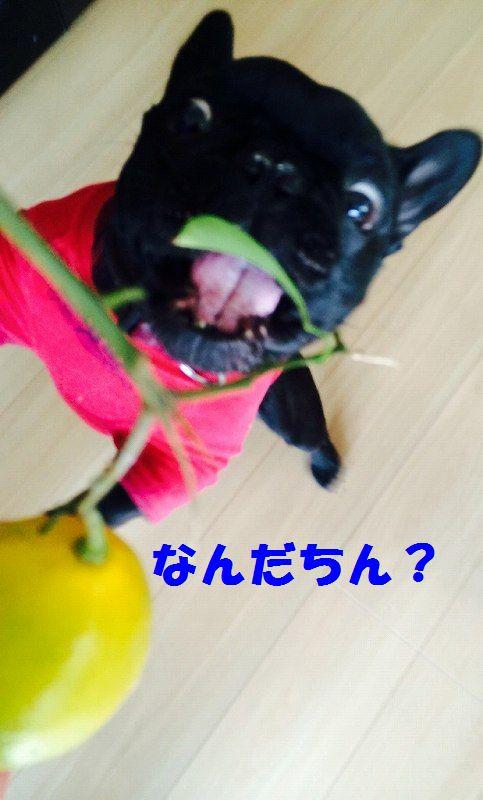IMG_6726.jpg