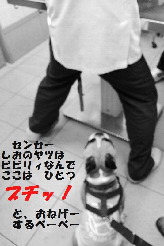 IMG_7667.jpg