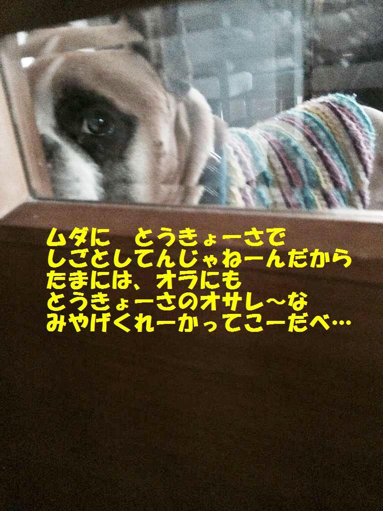 IMG_7745.jpg