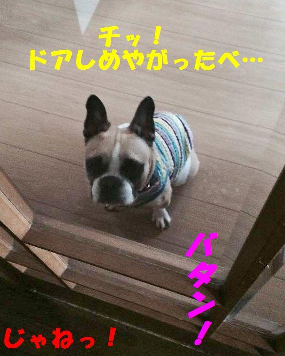 IMG_8784.jpg