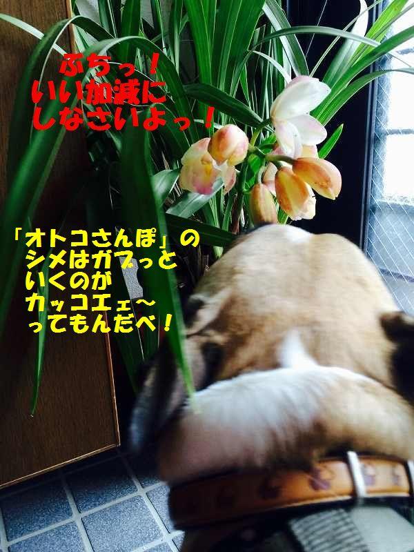 IMG_9090_20150313100431fa8.jpg