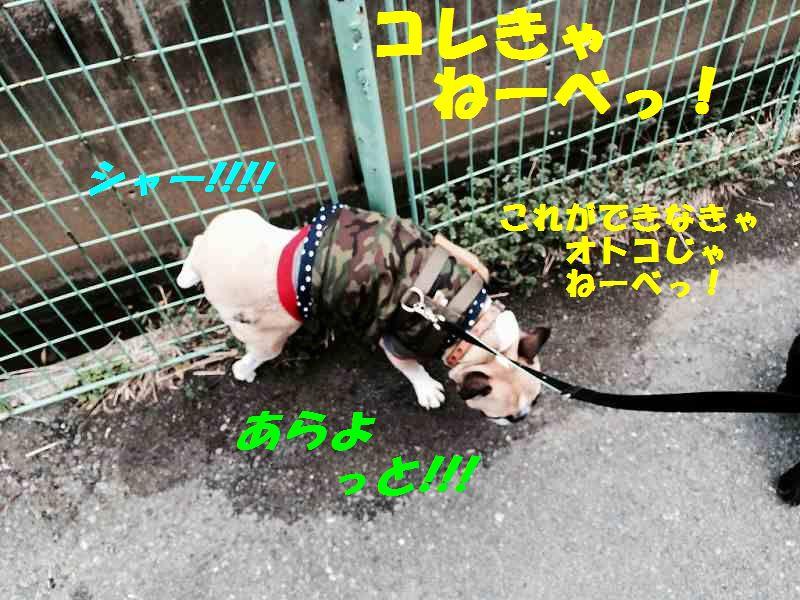 IMG_9905.jpg