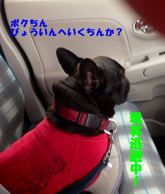 IMG_9978.jpg