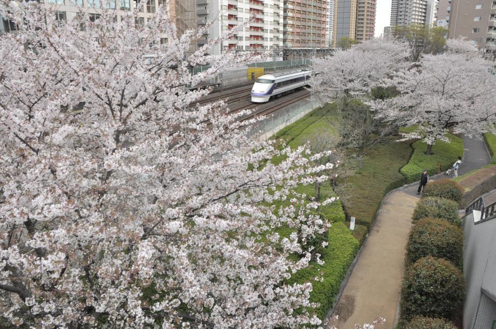 140405kawaguchi-.jpg
