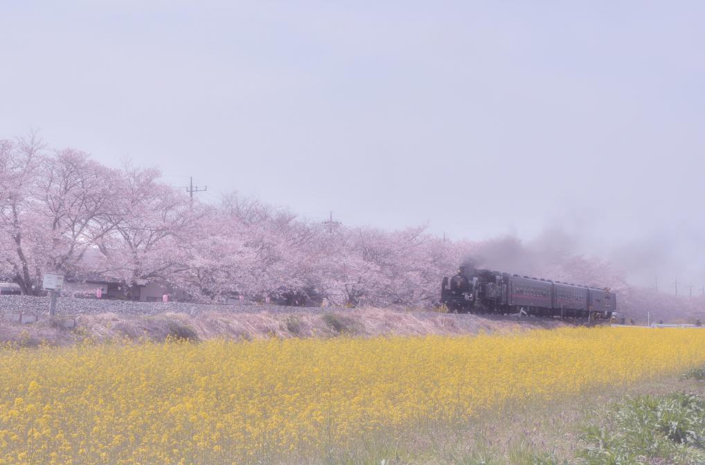 150412hanajyu-tan.jpg
