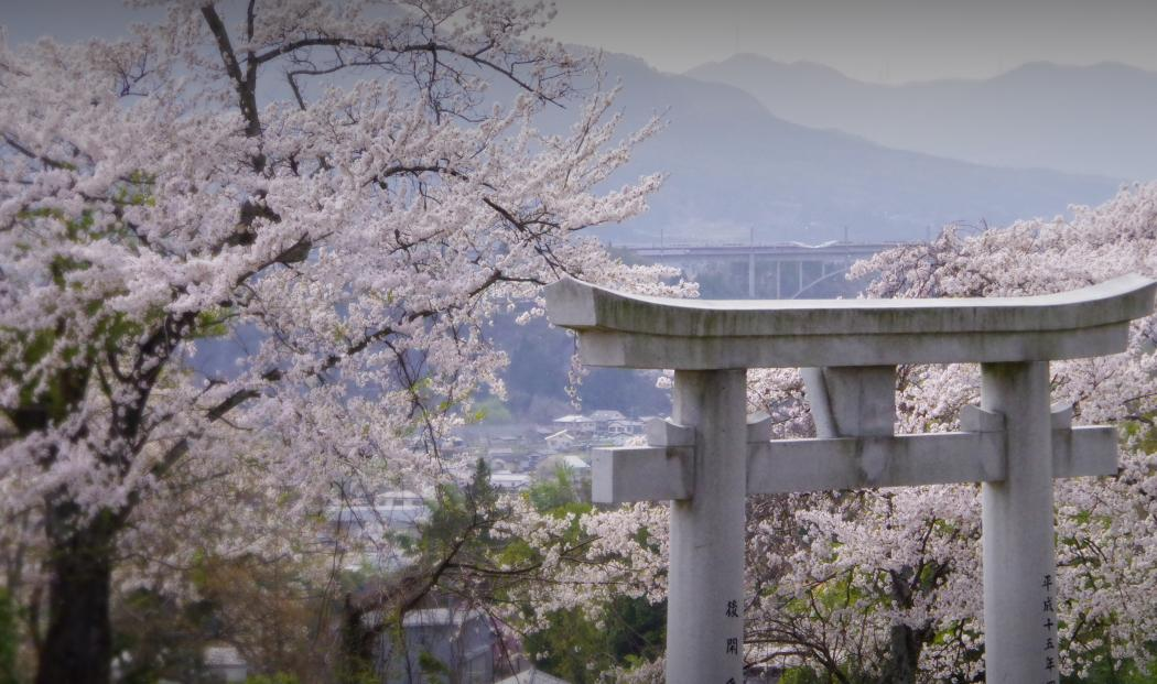 150418sakura-jyoetsu.jpg