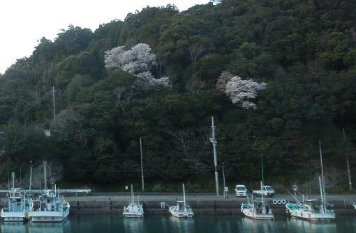 5.桜と港