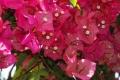 14.温室の美しい花