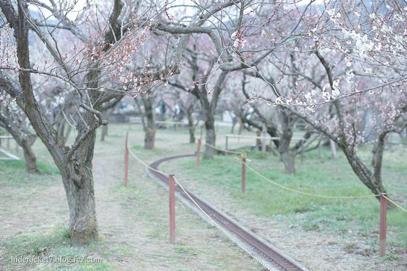 bairin_2015_02.jpg