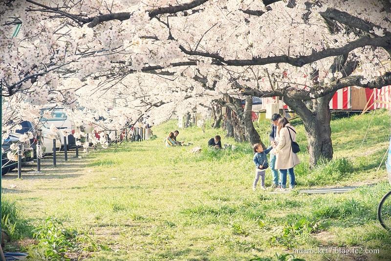 gongendou_2015_sakura_04.jpg