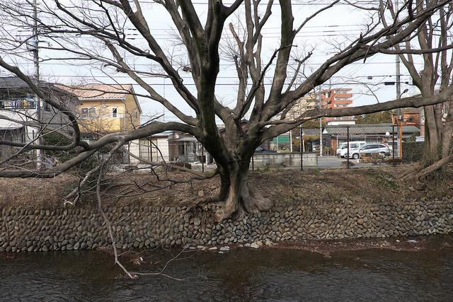 拝島玉川上水駅003