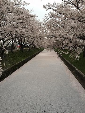 3image1桜