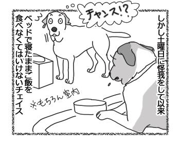 羊の国のラブラドール絵日記シニア!!「我慢だエビちゃん」3