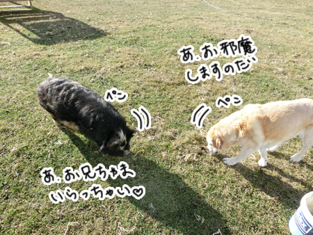 羊の国のラブラドール絵日記シニア!!「エビスの変化」2