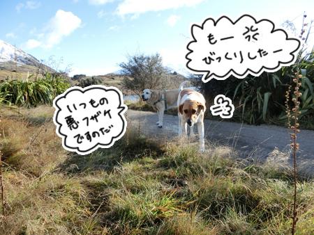 羊の国のラブラドール絵日記シニア!!「エビスの変化」5