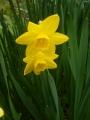 春の変化3