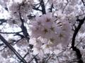 2015お花見6