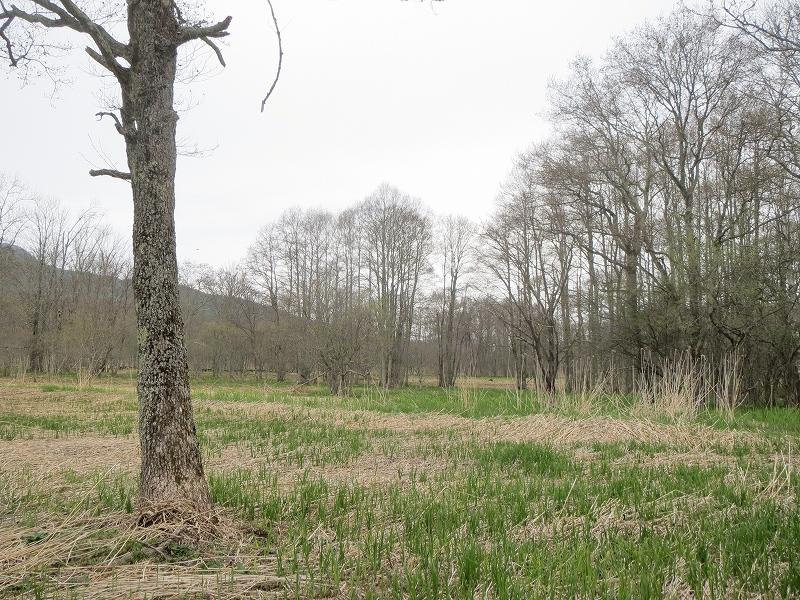 rs-湿原の状況