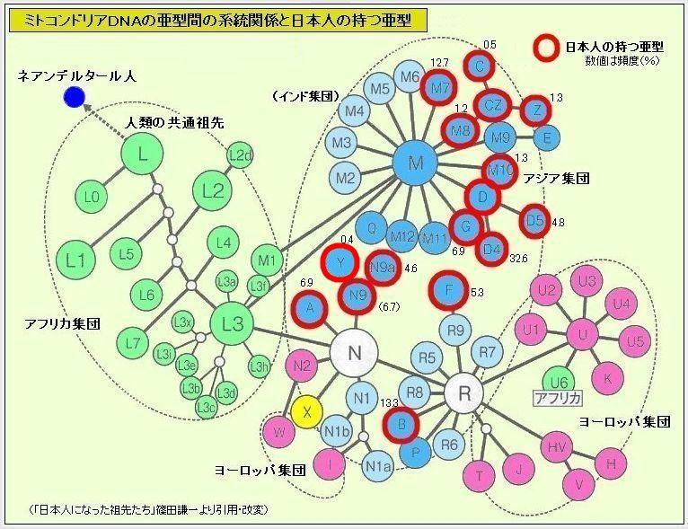 1dnaakei_no_keitoukannkei.jpg