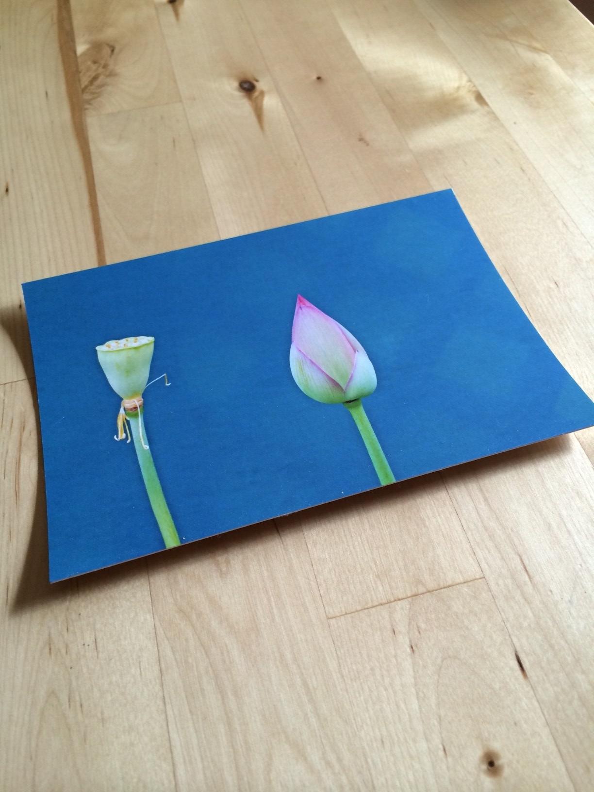 rootus flower