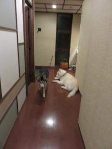 2014-11-22伊豆箱根 (149)