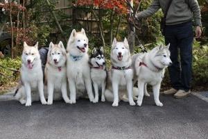 2014-11-22伊豆箱根2 236
