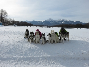 2015-01-25滝沢牧場 110