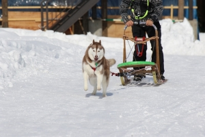2015-01-25滝沢牧場 187